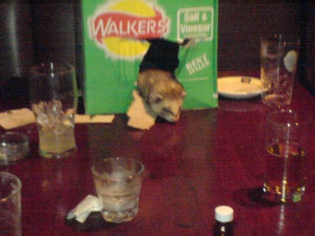 Ferrets n beer